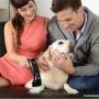 B-cure Laser - Veterinary medicine